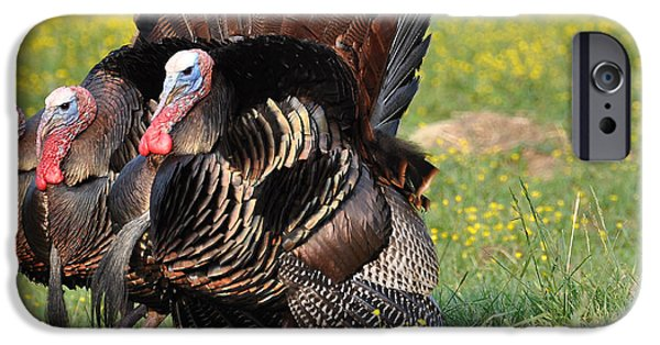 Best Sellers -  - Eastern Wild Turkey iPhone Cases - The Line Up iPhone Case by Todd Hostetter