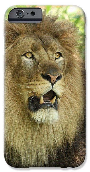 The Lion King iPhone Case by Kim Hojnacki