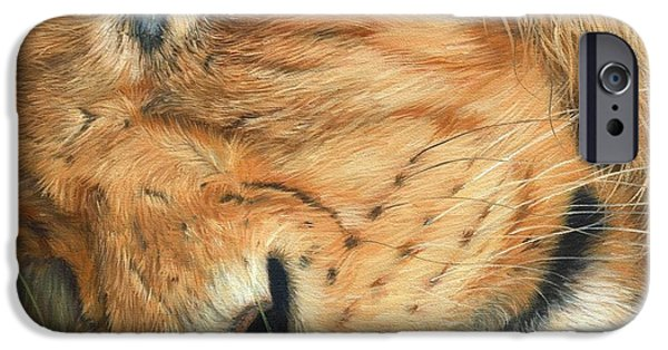 Sleepy iPhone Cases - The Lion Sleeps iPhone Case by David Stribbling