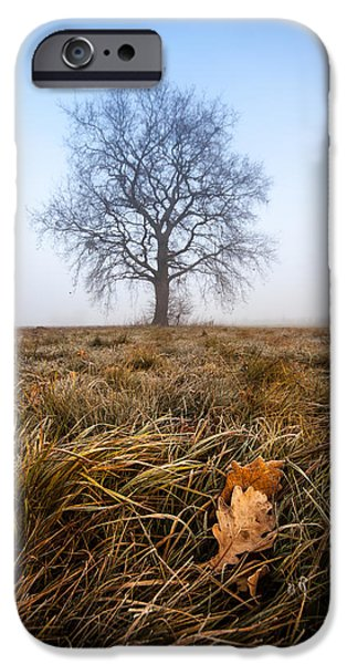 The Lone Oak iPhone Case by Davorin Mance