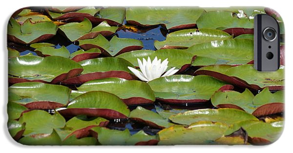 Botanical iPhone Cases - The Lonely One iPhone Case by Zori Minkova