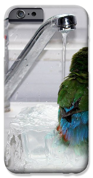 The Lovebird's Shower iPhone Case by Terri  Waters