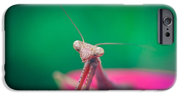 Mantises iPhone Cases - The Mantis iPhone Case by Shane Holsclaw