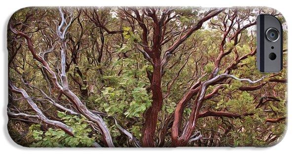 Lone Tree iPhone Cases - The Manzanita Tree iPhone Case by Heidi Smith