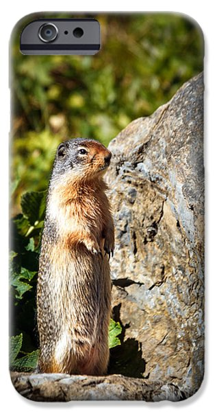 Groundhog iPhone Cases - The Marmot iPhone Case by Robert Bales