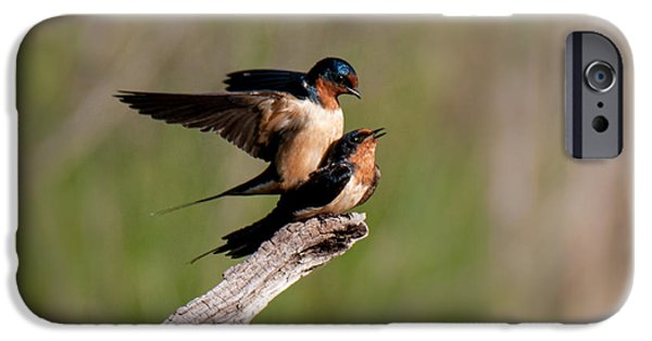 Barn Swallow iPhone Cases - The Mating Dance iPhone Case by Jean Cardia