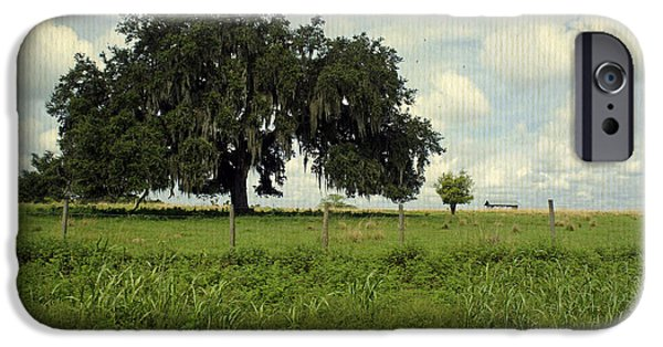 Mighty Oak iPhone Cases - The Mighty Oak iPhone Case by Laurie Perry