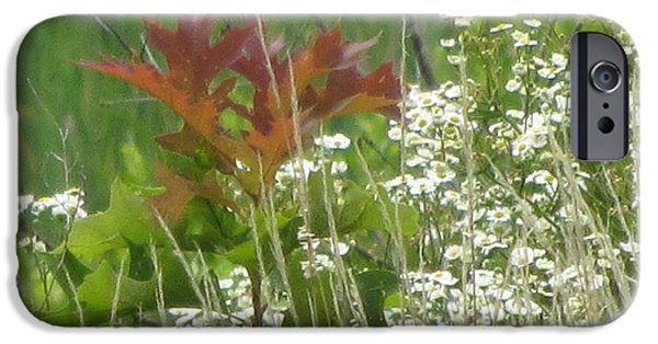 Mighty Oak iPhone Cases - The Mighty Tiny Oak Amidst White Flowers iPhone Case by Debbie Nester