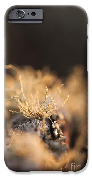 July iPhone Cases - The Miniature World of Lichen iPhone Case by Anne Gilbert