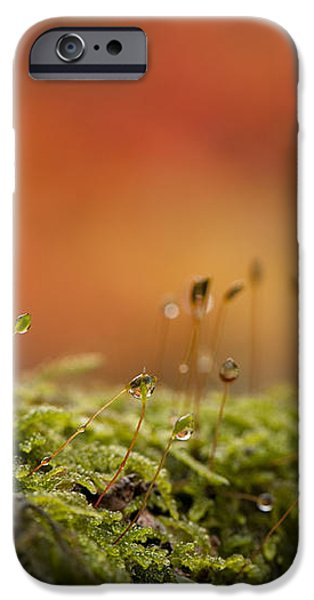 The Miniature World of Moss  iPhone Case by Anne Gilbert