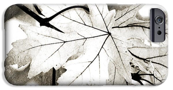 Macro Mixed Media iPhone Cases - The Mysterious Leaf Abstract BW iPhone Case by Andee Design