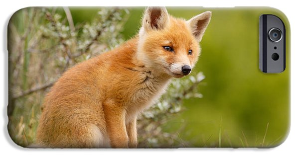 Innocence Photographs iPhone Cases - The New Kit ...Curious Red Fox Cub iPhone Case by Roeselien Raimond