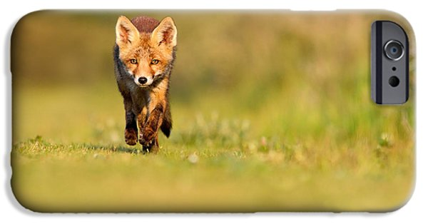Cute. Sweet iPhone Cases - The New Kit on the Grass - Red Fox Cub iPhone Case by Roeselien Raimond