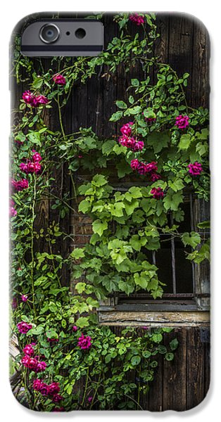 Rake iPhone Cases - The Old Barn Window iPhone Case by Debra and Dave Vanderlaan