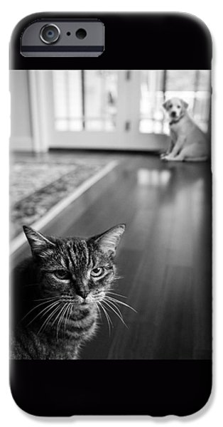 Afraid iPhone Cases - The old cat and the new puppy iPhone Case by Diane Diederich