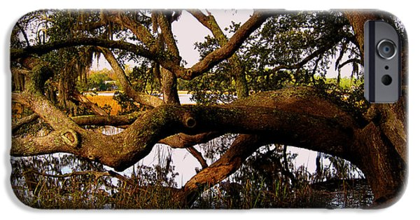 River View iPhone Cases - The Old Tree at the Ashley River in Charleston iPhone Case by Susanne Van Hulst