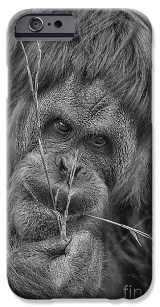 Orangutan iPhone Cases - The Orangutan Album-Black and White iPhone Case by Douglas Barnard