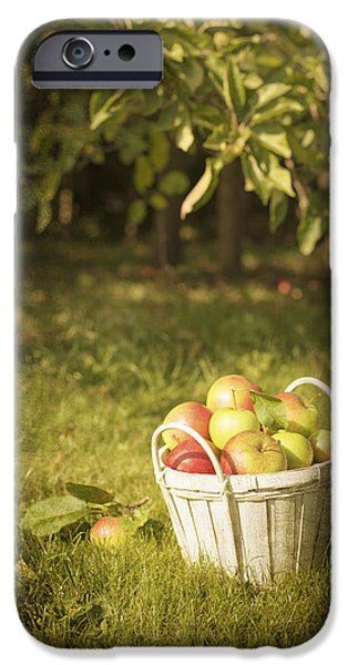 Fruit Basket iPhone Cases - The Orchard iPhone Case by Amanda And Christopher Elwell