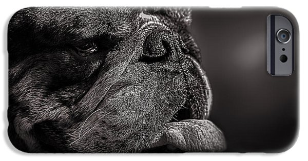 Black Dog iPhone Cases - The other dog next door iPhone Case by Bob Orsillo