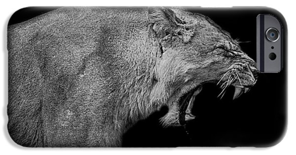 Lioness iPhone Cases - The pain within iPhone Case by Paul Neville