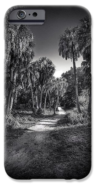 Palmettos iPhone Cases - The Palm Trail b/w iPhone Case by Marvin Spates
