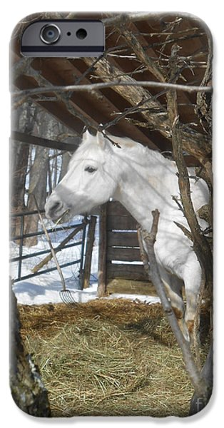The Horse iPhone Cases - The Paso Fino Stallion at Home iPhone Case by Patricia Keller