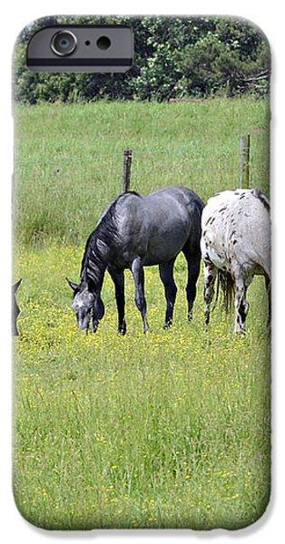 The Pasture iPhone Case by Susan Leggett