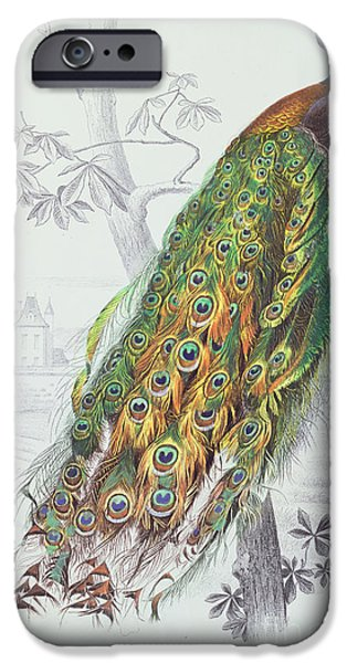Birds iPhone Cases - The Peacock iPhone Case by A Fournier