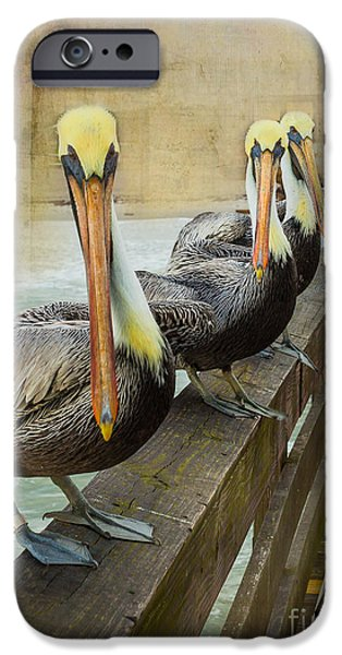 Marine iPhone Cases - The Pelican Gang iPhone Case by Steven Reed
