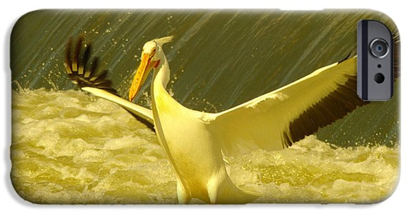 Sea Birds iPhone Cases - The Pelican Lands iPhone Case by Jeff  Swan