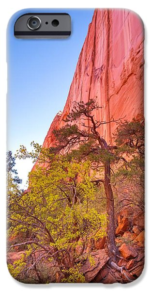 Pines iPhone Cases - The Pine Below the Red Cliff iPhone Case by Mitch Johanson