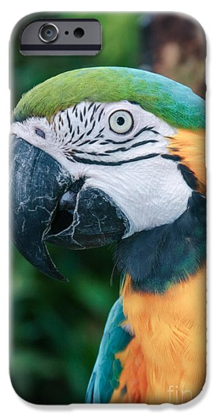Flight iPhone Cases - The Poetry of Nature iPhone Case by Sharon Mau