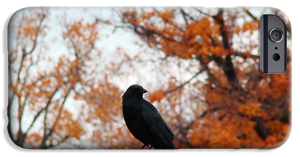 Fall Scenes iPhone Cases - The Point iPhone Case by Gothicolors Donna Snyder
