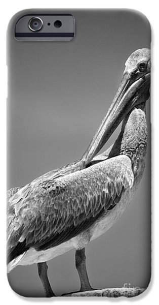 Michelle iPhone Cases - The Proper Pelican iPhone Case by Michelle Wiarda