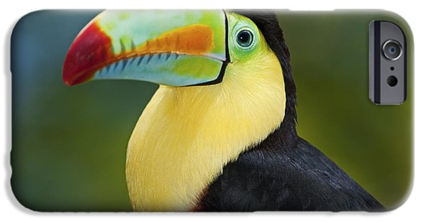 Toucan iPhone Cases - The Rainbow Bird.. iPhone Case by Nina Stavlund