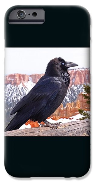 The Raven iPhone Case by Rona Black