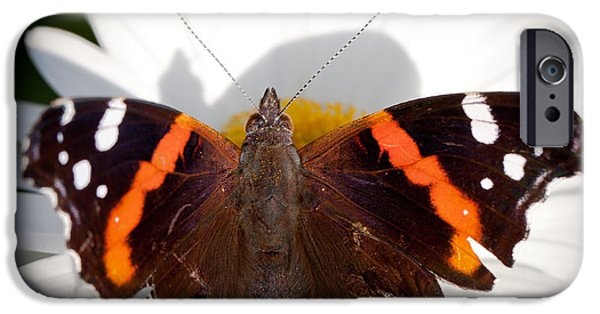 Buterfly iPhone Cases - The Red Admiral Butterfly iPhone Case by David Patterson