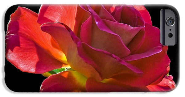 Haybale iPhone Cases - The Red One iPhone Case by Robert Bales