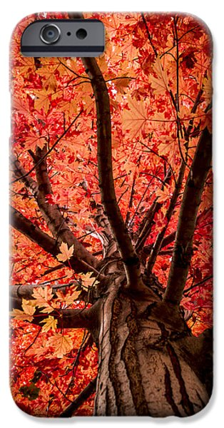Autumn Scenes iPhone Cases - The Reds of Fall iPhone Case by Teri Virbickis
