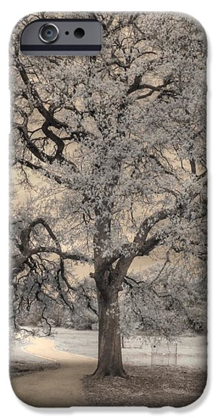 Mighty Oak iPhone Cases - The Road Less Traveled iPhone Case by Jane Linders