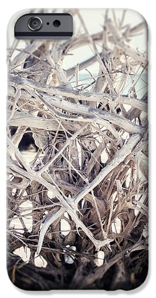 The Roots iPhone Case by Lisa Russo