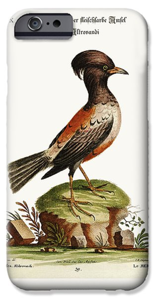 Animal Drawings iPhone Cases - The rose or carnation-coloured Ouzel of Aldrovandi iPhone Case by Splendid Art Prints