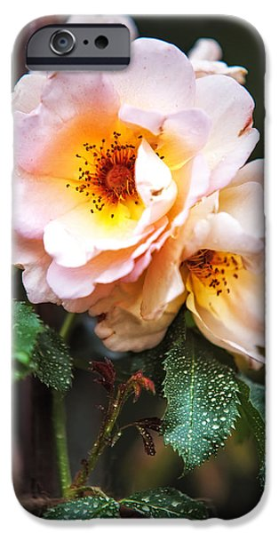 The Rose with Your Name. Park of De Haar Castle iPhone Case by Jenny Rainbow