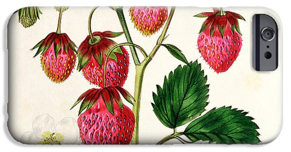 Berry iPhone Cases - The Roseberry Strawberry iPhone Case by Edwin Dalton Smith