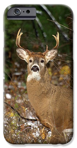 The Rutting Whitetail Buck iPhone Case by Thomas Young