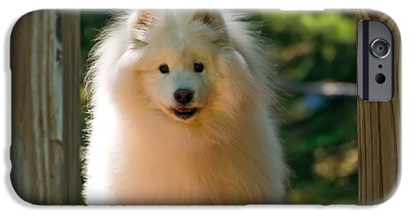 Sled Dog iPhone Cases - The Samoyed Smile iPhone Case by Lois Bryan
