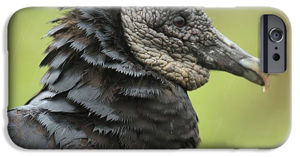 Vulture iPhone Cases - The Scavenger iPhone Case by Adam Jewell