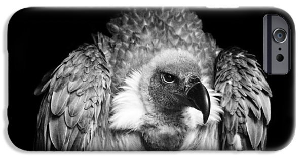 Photography Photographs iPhone Cases - The Scavenger iPhone Case by Chris Whittle