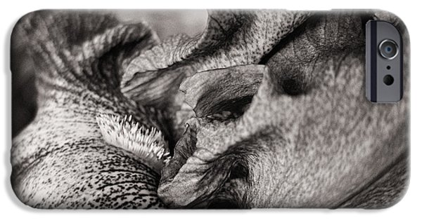 White Beard iPhone Cases - The Secret Life of an Iris iPhone Case by Mary Lee Dereske