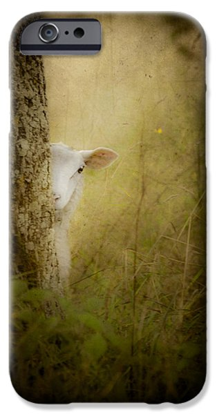 Rural iPhone Cases - The Shy Lamb iPhone Case by Loriental Photography